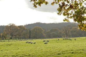 Financial News UK | Countryside Alliance refused charitable status