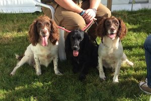 10 things you need to know about gundog insurance