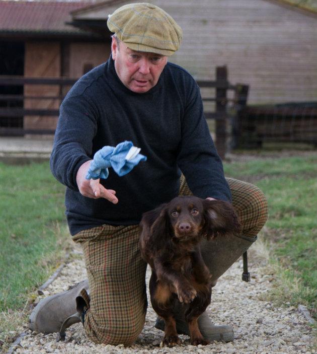 Gundog training puppy