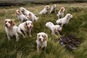 Remembering an extraordinary Clumber spaniel