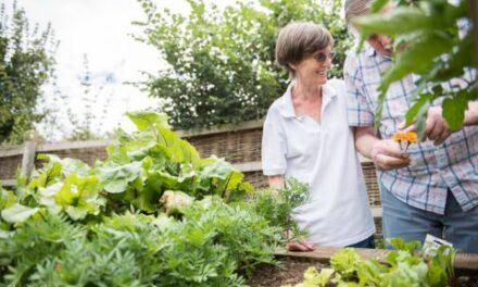 The Dementia Sensory Garden at Stanfield Nursing Home